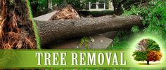 Hire Tree Removal Anaheim CA to protect your property  Don't waste time trying to cut down any unsightly and unsafe bushes and trees on your own. To get more information about us: http://treeremovalanaheim.com/