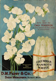 D.M. Ferry & Co. - Seed annual 1894