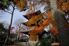 秋の豪徳寺三重塔 世田谷区豪徳寺(Gotokuji in Setagaya-ku) | by setagayatoieba