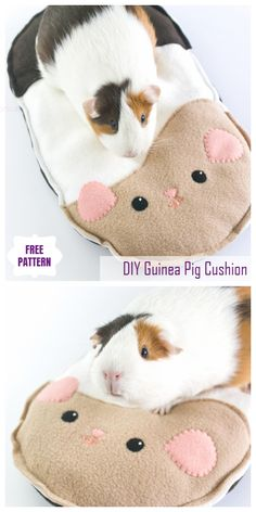Discover recipes, home ideas, style inspiration and other ideas to try. Diy Guinea Pig Cage, Guinea Pig Hutch, Pet Guinea Pigs, Guinea Pig Care, Pet Pigs, Diy Guinea Pig Toys, Hamsters, Guinie Pig, Pig Habitat
