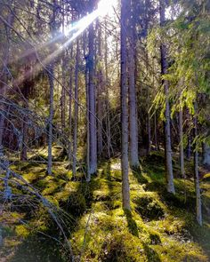Day off #april #easter #forest #tree #trees #huhtikuu #spring #kevät #nature #naturegram #ig_nature  Day off #april #easter #forest #tree #trees #huhtikuu #spring #kevät #nature #naturegram #ig_nature #tree_brilliance #nature_brilliance #sun #luonto #suomi #finland #suomenluonto #scandinavia #scandinaviannature #metsä #meninmetsään #optoutside #tampere #luonnossa #dayoff #beautiful #relax #shadows #green