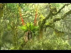 Biomas do Brasil - Parte 1