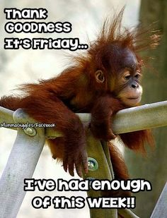 - Monkeys Funny - Friday More The post Friday appeared first on Gag Dad. Humor Friday …Friday - Monkeys Funny - Friday More The post Friday appeared first on Gag Dad. Good Morning Funny Pictures, Funny Good Morning Quotes, Good Morning Love, Hilarious Pictures, Work Quotes, Cute Quotes, Funny Quotes, Funny Humor, Memes Humor