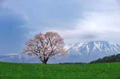 Koiwai, Iwate, Japan