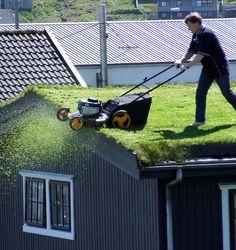 honey do list - mow the roof