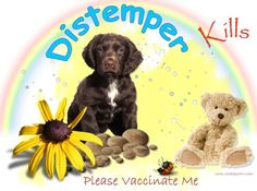 Canine Distemper Kills Please vaccinate Me