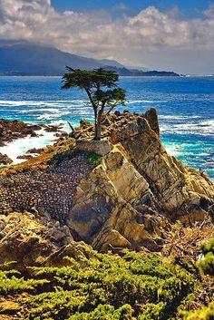 The Lone Cypress, 17-Mile Drive, Monterey Peninsula, California by photosbyflood