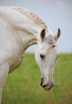 Beautiful Braided Mane - Horse pic