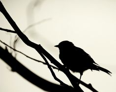 Black And White Birds Silhouette Fresh New Hd Wallpaper Pictures Of The Week, Bird Pictures, Nature Pictures, Animal Silhouette, Silhouette Art, Silhouette Tattoos, Nocturne, Chill Quotes, Silhouette