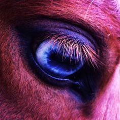 Loki 's eye #horseeye #pony #lewitzer #horse