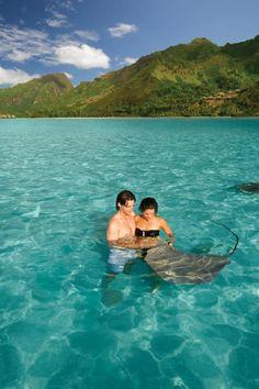 Ray feeding in Moorea, French Polynesia