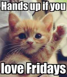 Cute Cat Memes & Funny Kitty Pics - Gentle Funniest Friday Cat Meme Informations. - Cute Cat Memes & Funny Kitty Pics – Gentle Funniest Friday Cat Meme Informations About Cute Cat M - Happy Friday Meme, Happy Monday Quotes, Friday Cat, Happy Memes, Friday Weekend, Happy Weekend, Its Friday Meme, Happy Friday Pictures, Funny Weekend