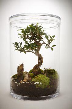 100x Miniature Bonsai Maison De Poupee Artisanale Paysage Jardin En Bois De Decoration De Coccinelle