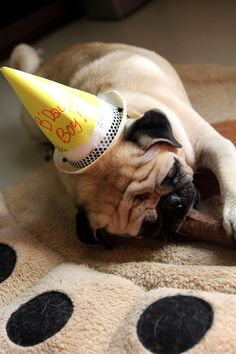 Happy birthday Pug - too much excitement for one day LOL Birthday Pug, Happy Birthday, Pug Pictures, Pug Pics, Pug Photos, Pug Mug, Pug Shirt, Pugs And Kisses, Best Dog Breeds