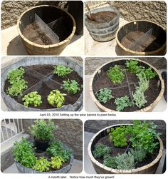 cute herb garden  | followpics.co