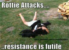 how true!   Puppies!!!!!