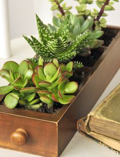 Create an easy succulent planter from Stampington's mini library drawer!