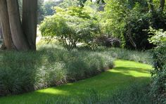 This design by Wilson McWilliam Studio in the UK creates something special in the shade. Plants grown by Bluedale suitable for shady areas include 'Green Giant' Liriope, 'Just Right' Liriope, 'Silver Streak' Liriope, 'Nyalla' Lomandra, 'Tanika' Lomandra and 'Little Jess' Dianella. Plant profiles www.bluedale.com.... Buy online www.bluedaleplant... Visit today!