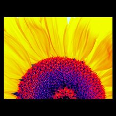 psychedelic sunflower postcards