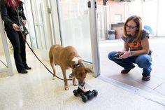 NYC ASPCA for traumatized dogs