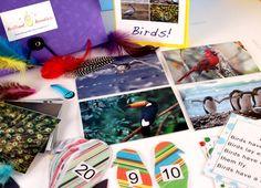 Preschool Bird Themed  Kit