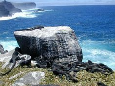 6-day Galapagos island-hopping tour. Day trips with overnight accommodations in hotels on the islands. Positiv Turismo, Quito.