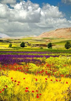 fields of flowers/Atlas, Morocco Beautiful World, Beautiful Places, Beautiful Pictures, Beautiful Scenery, Belleza Natural, Nature Scenes, Belle Photo, Beautiful Landscapes, Wonders Of The World