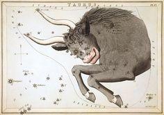 """Taurus"", plate 17 in Urania's Mirror"