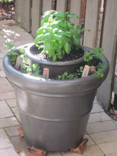 Fascinujúce bylinková záhradka Pestovanie Myšlienky (20) Foto