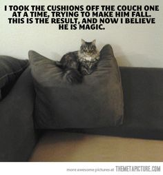 Cat wizardry…#WhyILoveCats