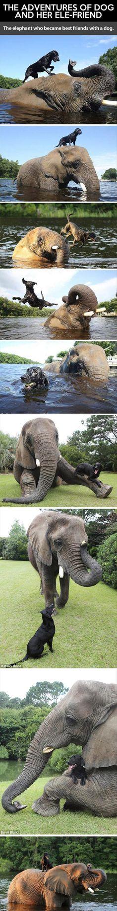 Dogs Elephant Friendship
