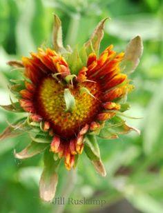 heart gardens | Heart-shaped in the garden | Flea Market Gardening