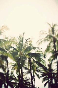 palm trees...You know why I love palm trees?? Because it usually means you are somewhere chilling with a beer (and a beach view) or exotic :)  LOVE!!!