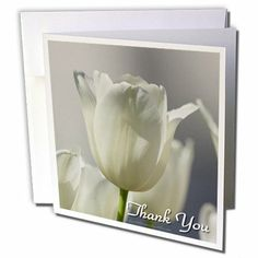 gc_98728_1 Lee Hiller Photography Photo Messages - Thank You - White Tulips - Greeting Cards-6 Greeting Cards with envelopes by Lee Hiller #Photography and Designs