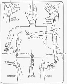 Figure 7 Wrist, hand and arm position/movement planes Yoga Anatomy, Anatomy Study, Anatomy Reference, Occupational Therapy, Physical Therapy, Gross Anatomy, Musculoskeletal System, Human Anatomy And Physiology, Medical Anatomy