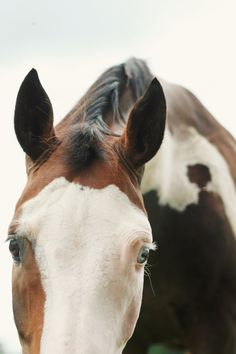 """Hello"" from a lovely horse"