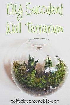 Easy DIY succulent wall terrarium #succulents #plants #garden #cactus