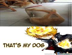 Katekyo Hitman Reborn..... Its his dog....