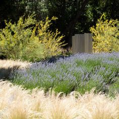 like the textures of the pale grass with the blue (heather or salvia?)
