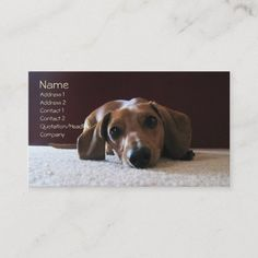 crockettsperfectpic, Name, Address 1, Address 2... Business Card Photographer Business Cards, Photography Business, Shelter, Terrier, Referral Cards, Age, Business Supplies, Floral Watercolor, Pets