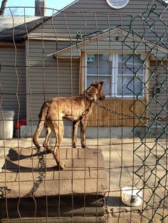 Ten Tips for Recognizing and Reporting Animal Abuse