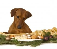 Baking For the Holidays for Your Dog