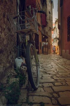 Stone Pavement, Countries Europe, Rovinj Croatia, Videos, Cute Animals, Around The Worlds, Landscape, Street, Places