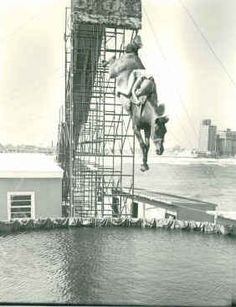 Gamal was one of the last diving horses in Atlantic City. He dove into his 20s. He was retired to a good home.