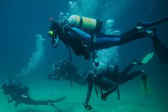 Diving and snorkeling - Everyday!