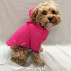 PrideBites Coat — Here Are The Most Awesome Dog Gifts You Haven't Seen Yet