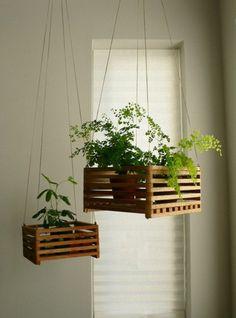 hängende zimmerpflanzen holzkasten