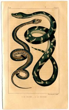 In the keen Celtic mind, snake symbolic meaning of transformation came from the shedding of its skin. Physical evidence of leaving its form behind (casting off the old self), and emerging a sleeker, newer version made the snake a powerful symbol of rebirth and renewal. whats-your-sign.com