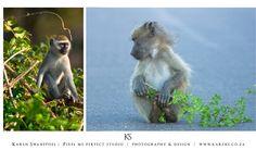 Stop monkeying around Monkey, Wildlife, Monkeys, At Sign