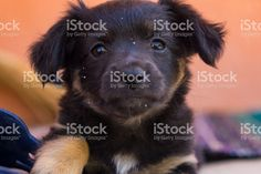 One day with the cutest little black puppy - playing, sleeping,. Black Puppy, Puppy Play, Photography Portfolio, Portrait Photo, Labrador Retriever, Puppies, Dogs, Cute, Animals